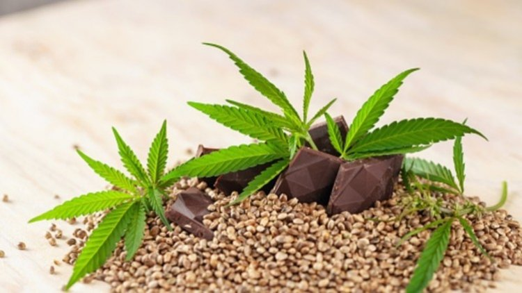The Future of CBD Within the Food & Beverage Industry